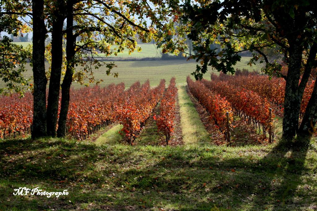 vigne nature