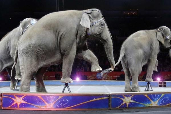 éléphants-ringling-800×450