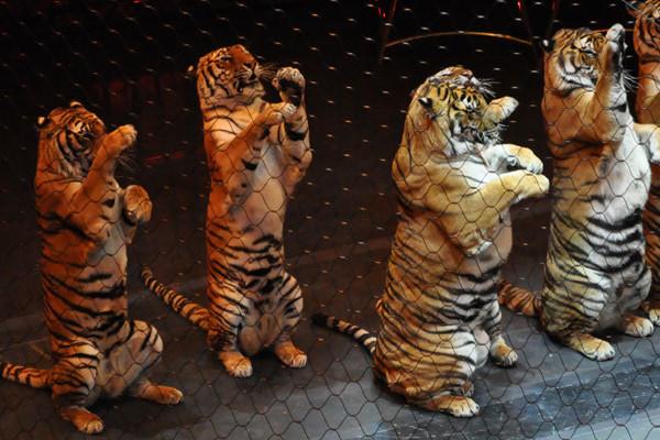 animaux-cirque-italie-irlande-vegan-interdiction